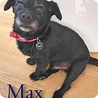 Adopt A Pet :: Max - Essex Junction, VT