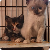 Adopt A Pet :: Esmerelder n Clarabelly - Whitestone, NY