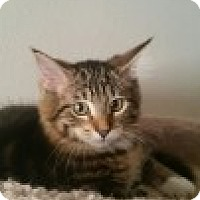 Adopt A Pet :: Rootbeer - McHenry, IL