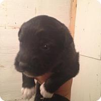 Adopt A Pet :: Wicket - Saskatoon, SK
