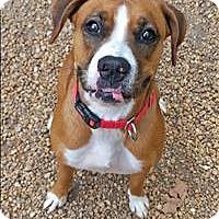 Adopt A Pet :: Dutchess - Charlottesville, VA