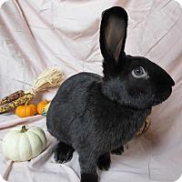 Adopt A Pet :: Michael - Alexandria, VA