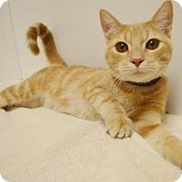 Adopt A Pet :: *TIGGER - Sacramento, CA