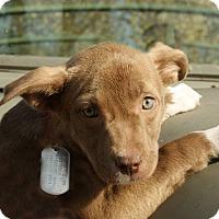 Adopt A Pet :: Turan - Dayton, OH