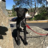 Adopt A Pet :: Lucy and Tasha - El Cajon, CA