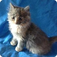Adopt A Pet :: Pufnstuf - Meridian, ID