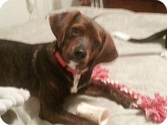 Jackson | Adopted Pupp...