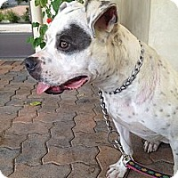 Adopt A Pet :: Sedona - Dana Point, CA