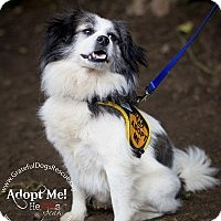Adopt A Pet :: Peabody - San Francisco, CA