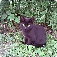 Adopt A Pet :: Up and coming - Syracuse, NY