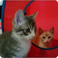 Adopt A Pet :: Tripper - Washington Terrace, UT