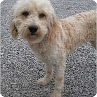 Adopt A Pet :: Kim - Menomonee Falls, WI
