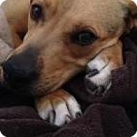 Adopt A Pet :: Peggy Sue - El Paso, TX