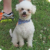 Adopt A Pet :: Cooper - Kingwood, TX