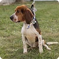 Adopt A Pet :: McCoy - Dumfries, VA