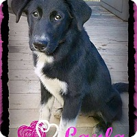 Adopt A Pet :: Layla meet me 10/3 - Manchester, CT