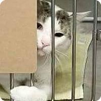 Adopt A Pet :: Nut - Putnam, CT