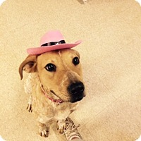 Adopt A Pet :: Carly - Fair Oaks Ranch, TX