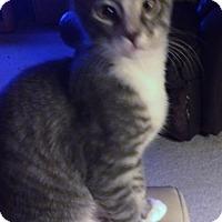 Adopt A Pet :: Smidgit - Monroe, GA