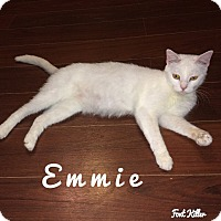 Adopt A Pet :: Emmie - Washington, DC