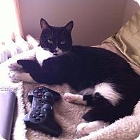 Adopt A Pet :: Coco - Essington, PA