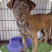 Adopt A Pet :: Morea - Barnesville, GA