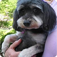 Adopt A Pet :: Mona - Salem, OR