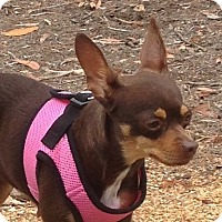 Adopt A Pet :: Coco - San Marcos, CA