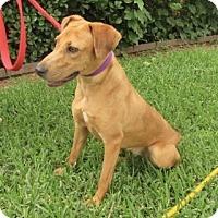 Adopt A Pet :: Sunshine - Bedford, TX