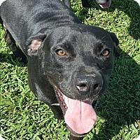 Adopt A Pet :: Boscoe - Neosho, MO