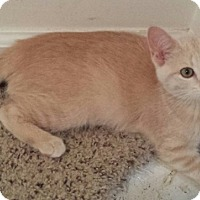 Adopt A Pet :: Powder - Cedar Springs, MI