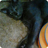 Adopt A Pet :: Wilson - Shippenville, PA
