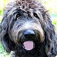 Adopt A Pet :: KC(ADORABLE
