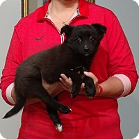 Adopt A Pet :: Bella - South Euclid, OH