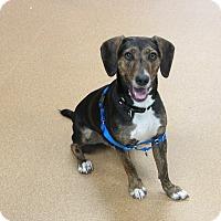 Foxhound Mix Dog for adoption in Norwalk, Connecticut - Richie