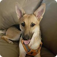 Adopt A Pet :: Rider - Austin, TX