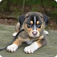 Adopt A Pet :: baby Trudy - Marlton, NJ