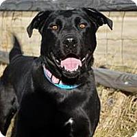 Adopt A Pet :: Wizard - Cheyenne, WY