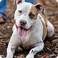 Adopt A Pet :: Dewey - Orlando, FL