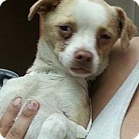Adopt A Pet :: Reuben URGENT - San Diego, CA
