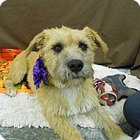 Adopt A Pet :: Liza - Lockhart, TX
