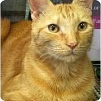 Adopt A Pet :: Milo - Fort Lauderdale, FL