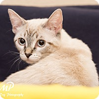 Adopt A Pet :: Sarafina - Fountain Hills, AZ