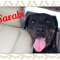 Adopt A Pet :: Sarabi - Gilbert, AZ