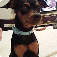 Adopt A Pet :: Shooter - Scottsdale, AZ