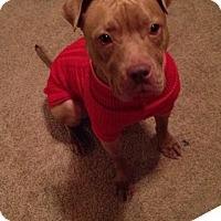 Adopt A Pet :: Pete - Gainesville, FL