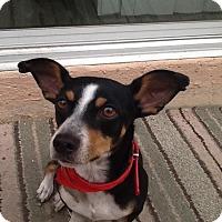 Adopt A Pet :: Pablo - Las Vegas, NV