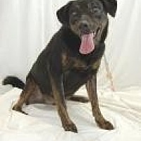 Adopt A Pet :: Ebony - Jackson, MS