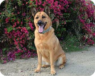 German Shepherd Dog Mix Dog for adoption in San Diego, California - Natasha