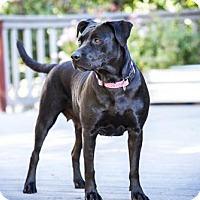 Adopt A Pet :: Honey 2 - Boulder, CO